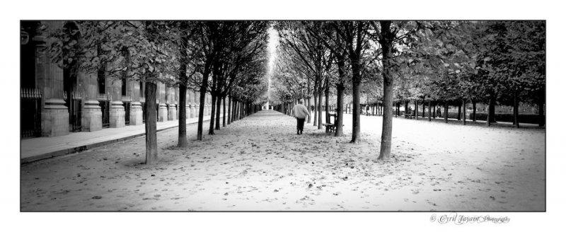 Jardin de Tuileries (1).jpg